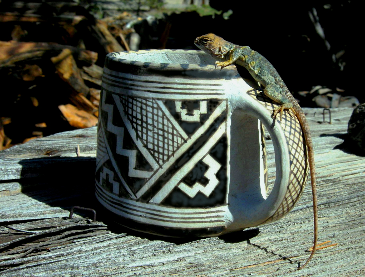 Collared Lizard on a Swink mugPED,